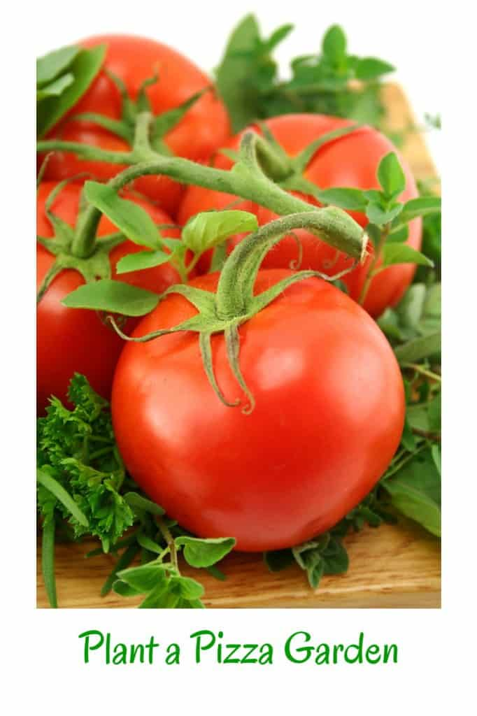 Plant a pizza garden and have all the ingredients fresh and ready to use.