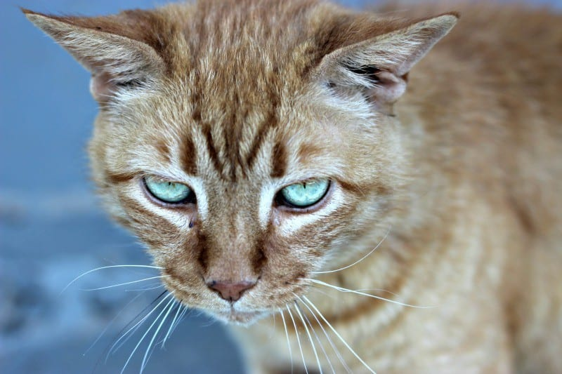 Reconizing the signs of Cat Anxiety