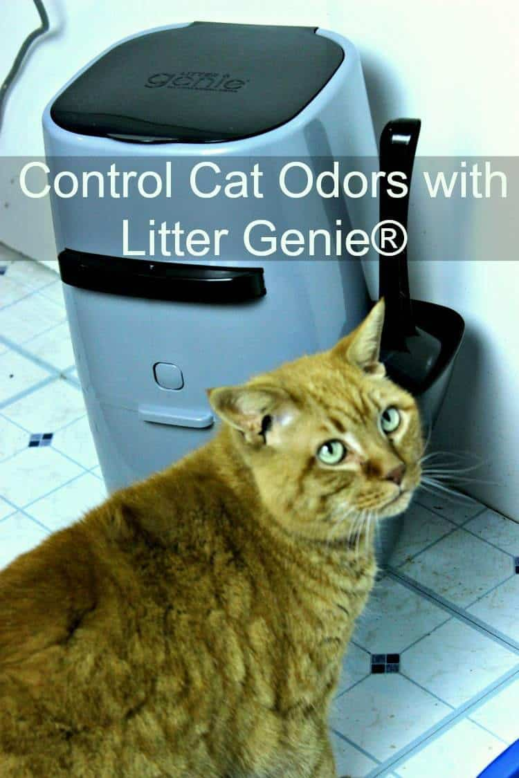 Control Cat Odors with Litter Genie®