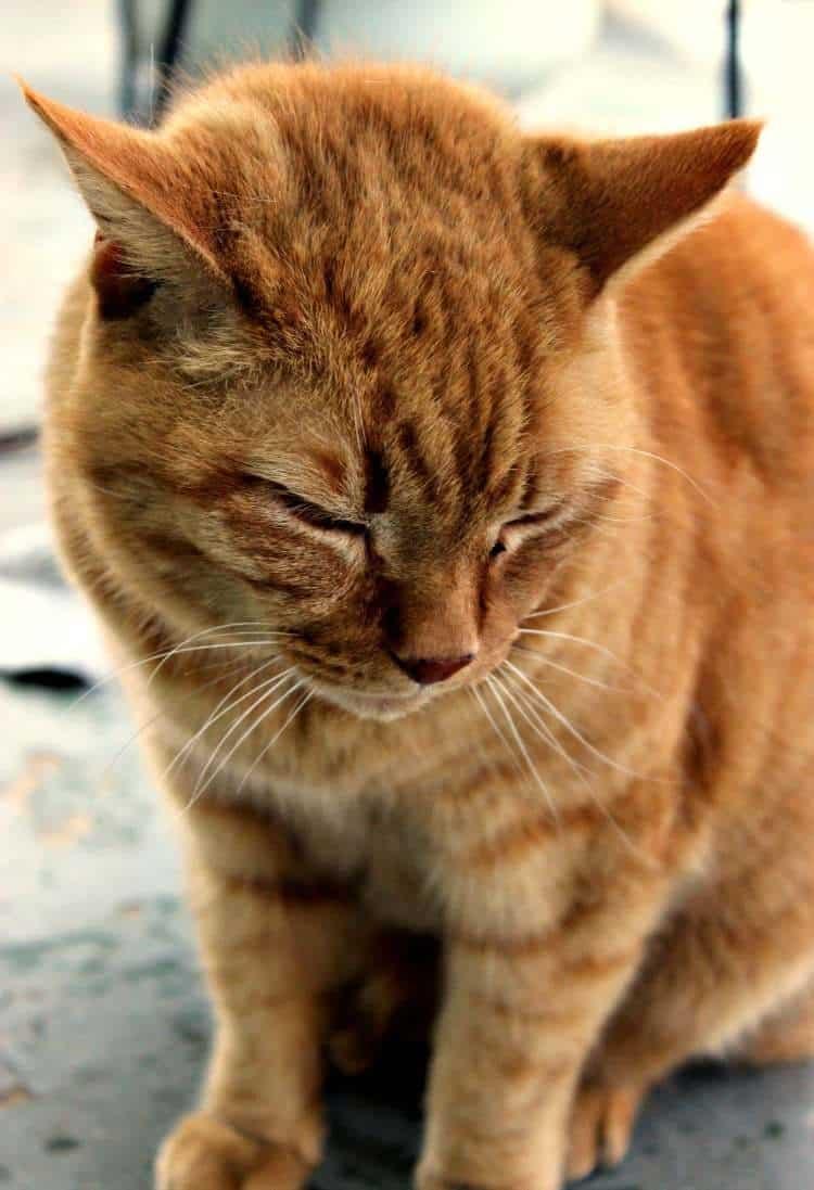 Priority Cat Litter